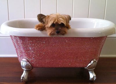 Hamptons Canine Concierge