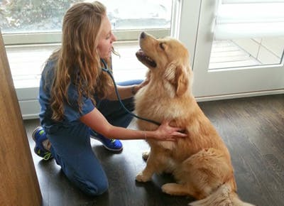 Veterinary Housecall Care