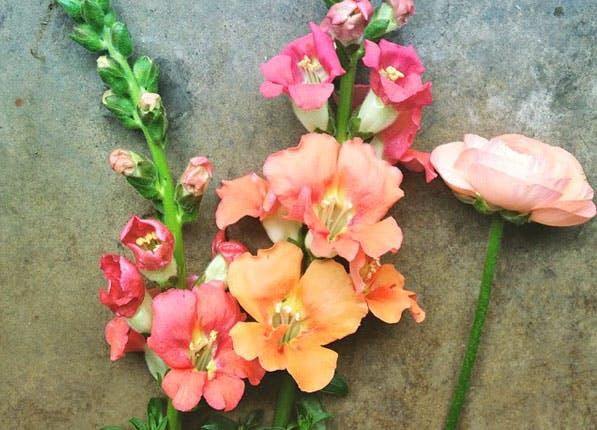 Blush Flowers 597x430