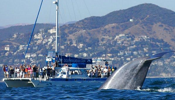 Dana Point Whale 597x343
