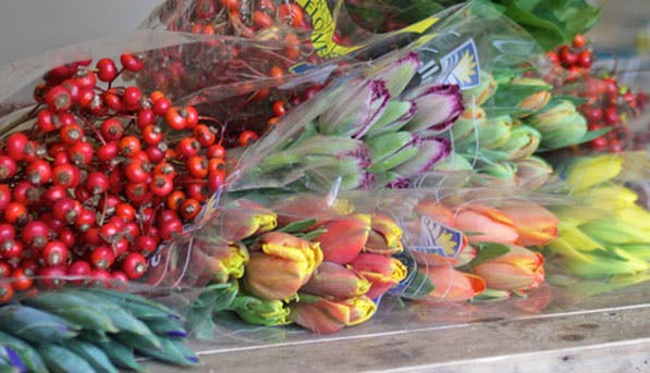 Flowers Plastic 597x343