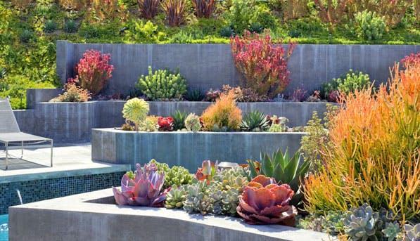 Succulents 597x343