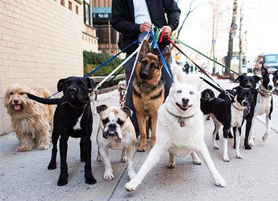An App for Hiring Dog Walkers