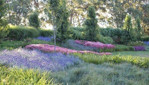 Wildflowers 597x343