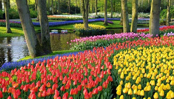 beautiful Gardens keukenhof