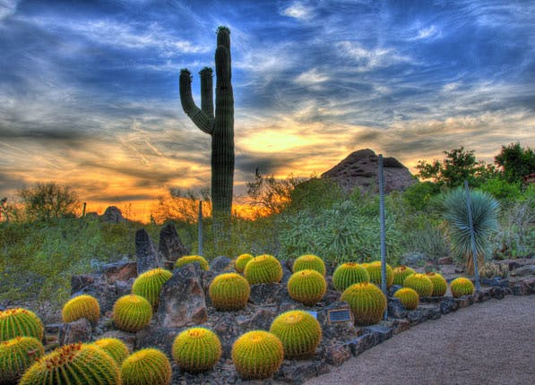 beautiful gardens arizona