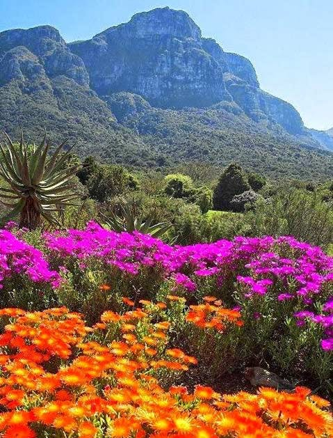 beautiful gardens cape town