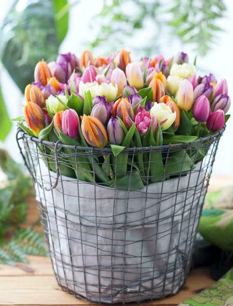 slide5 flowers 479x629
