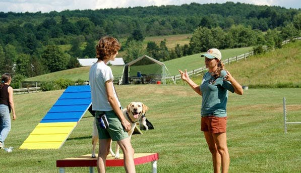 DogSummerCamps1