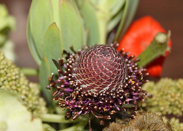 Florist Clementine 597x430