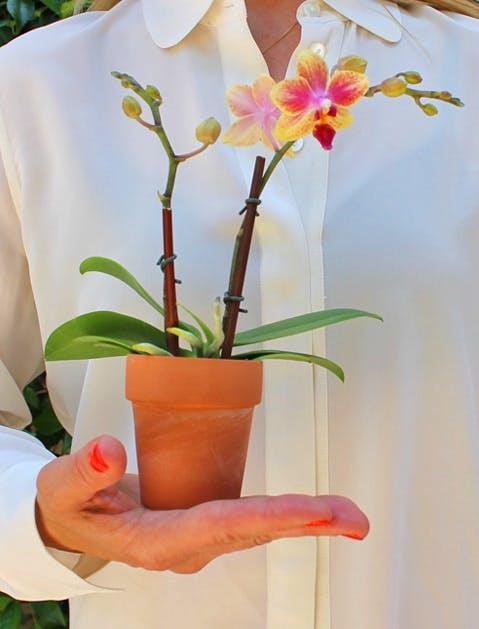 Florist Orchid 479x629
