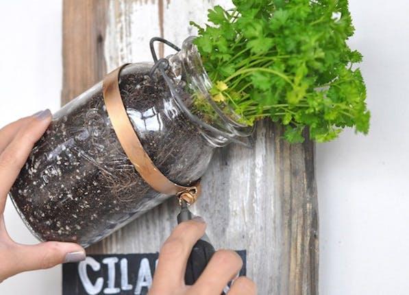 mason herb