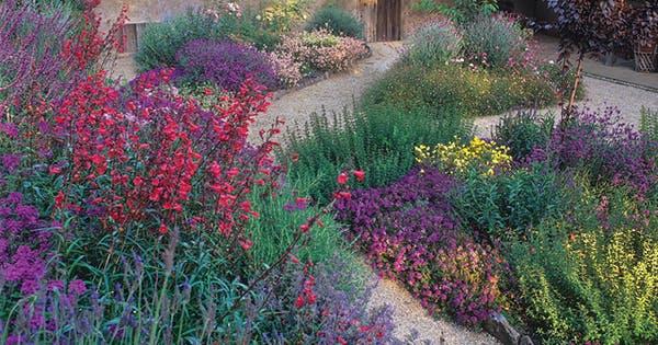 9 Plants That Ll Make Your Southern California Garden Flourish