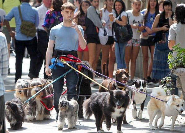 nyc deposit dogs