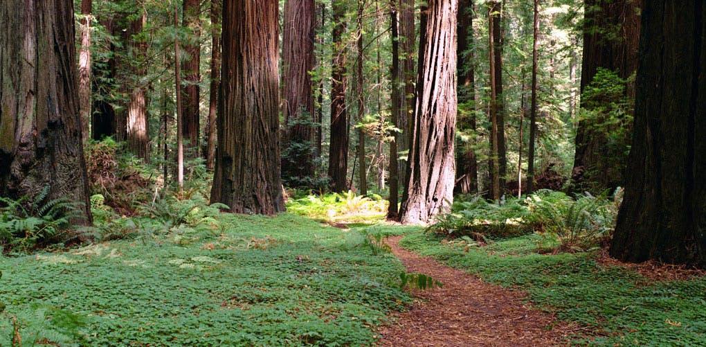 sanpellegrinotrees