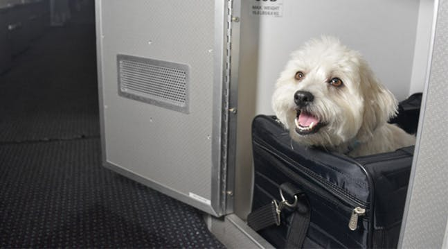 Your Dog Can Now Fly in a First-Class Pet Cabin