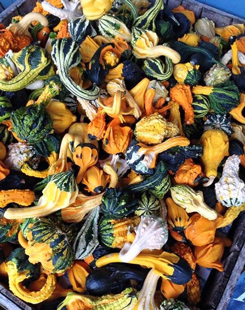 NY Produce HarvestMoon
