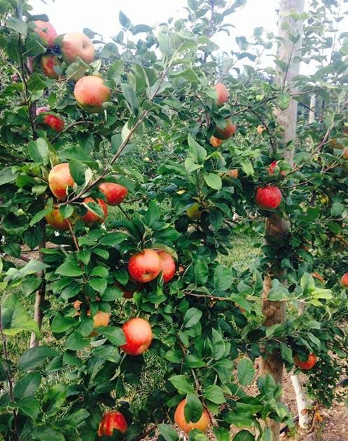 NY Produce Wightmans1