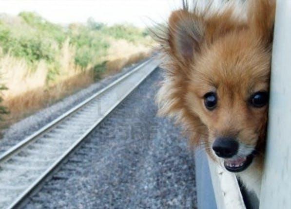 dogcitiesberlin