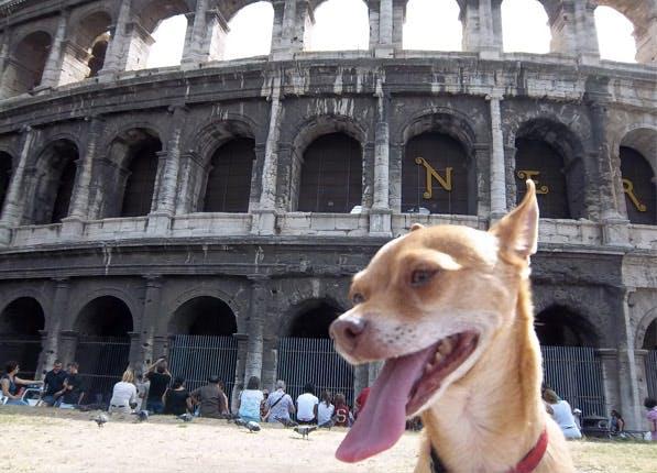 dogcitiesrome