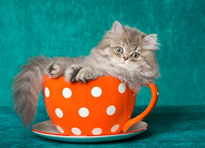 Attention: Cat Cafes Are Invading NYC