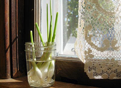 The Hell with the Grocery Store. Heres How to Grow Onions on Your Windowsill