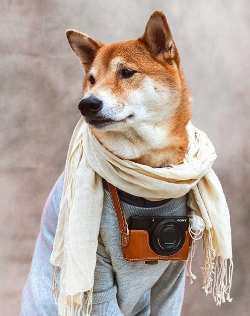 NY Dogs List1