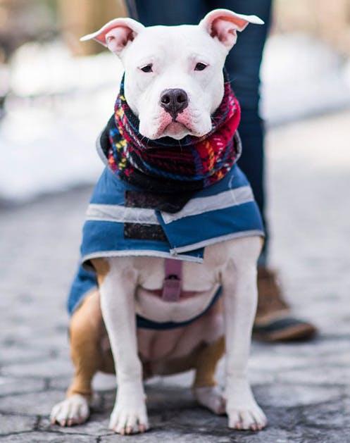 NY Dogs List12