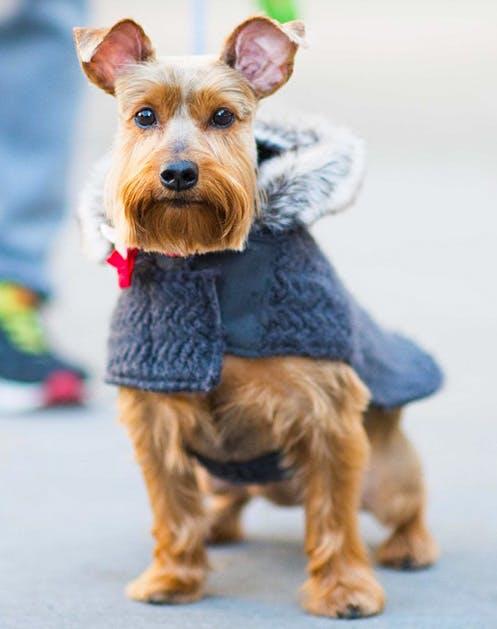 NY Dogs List14