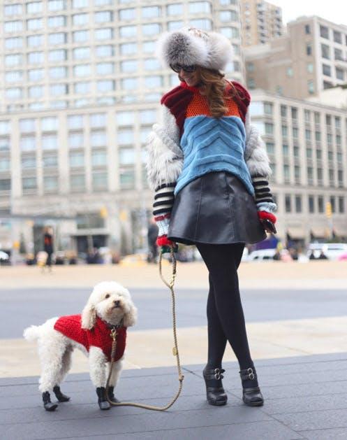 NY Dogs List15