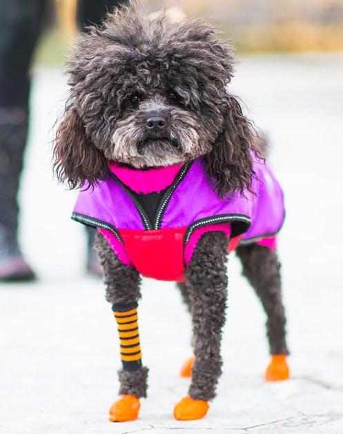 NY Dogs List2