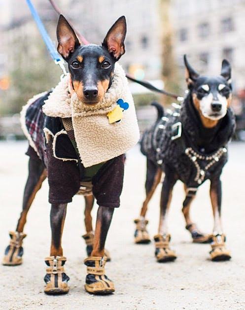NY Dogs List3
