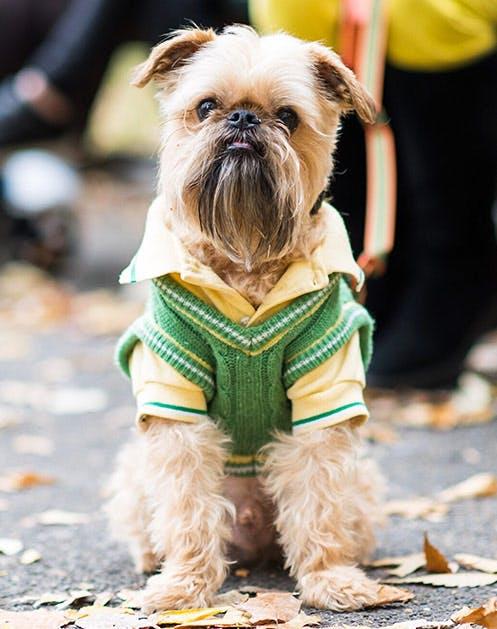 NY Dogs List6