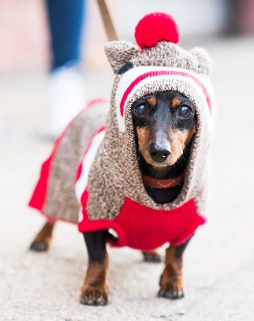 NY Dogs List7