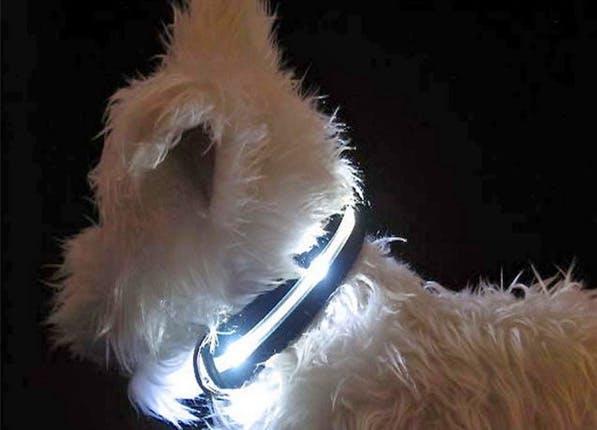 Pets collar 597x430