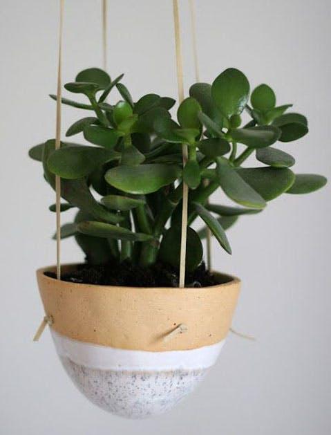 jade plant list
