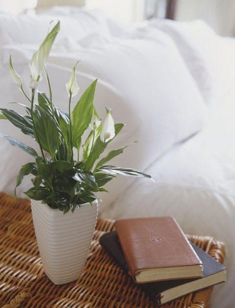 peace lily list