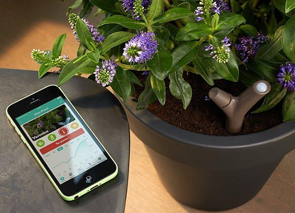 Parrot Flower Power Sensor