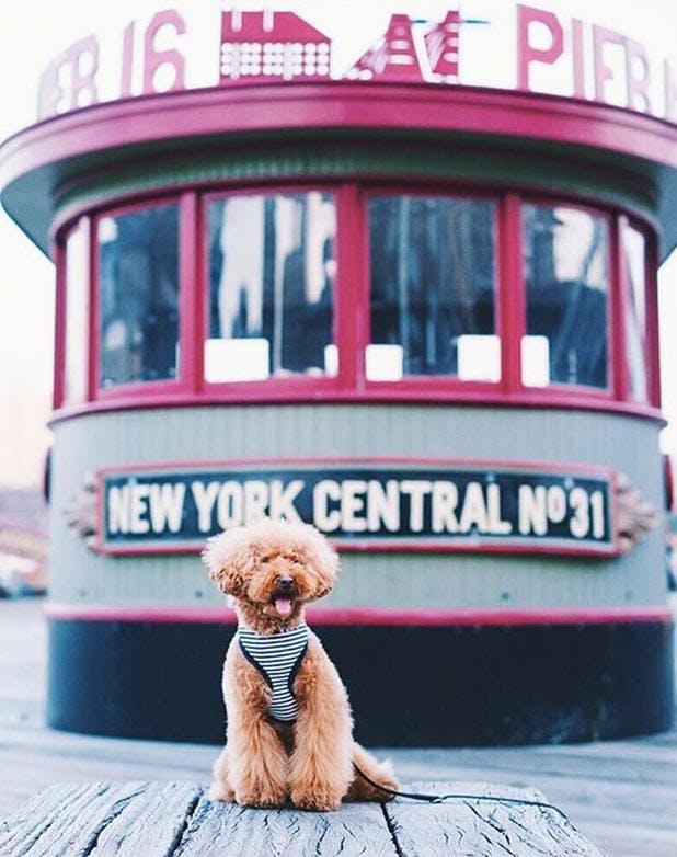 NY SpringDogs List3
