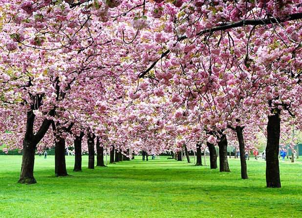 NY Spring List1