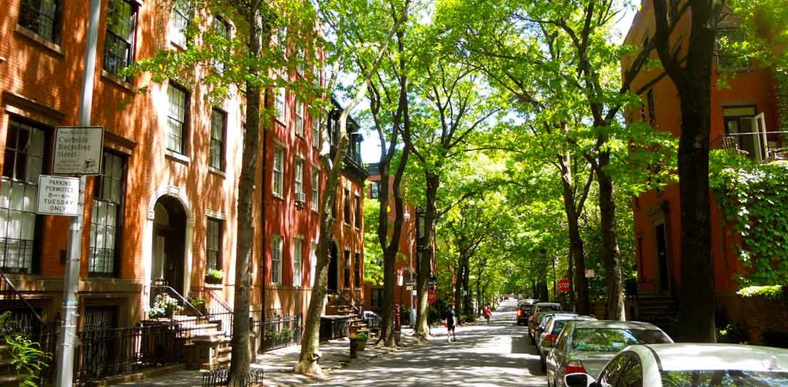 Image result for Tree-lined streets brooklyn