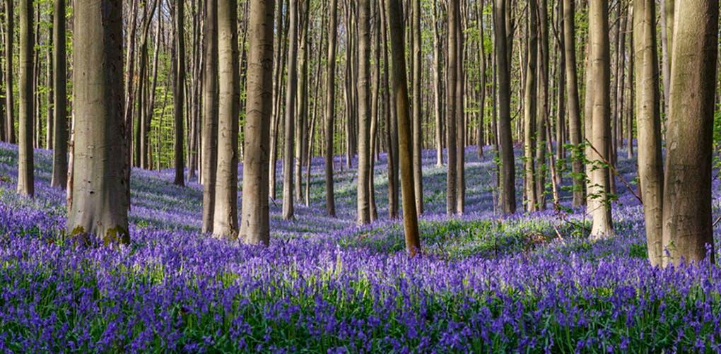 Most Beautiful Nature Spot Nyc