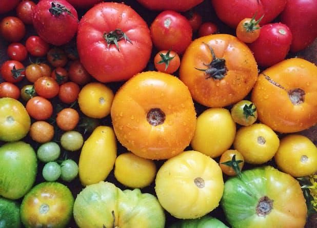 best veg tomato
