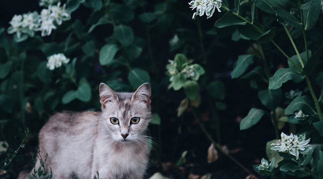 The All-Natural Way to Keep a Cat Out of Your Flower Beds