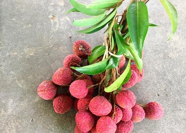 food lychee