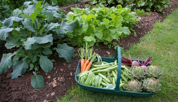 veggie garden list1