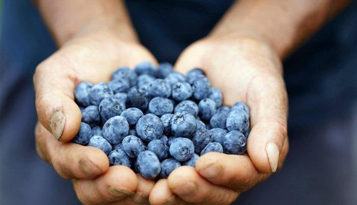 Blueberries 728x418