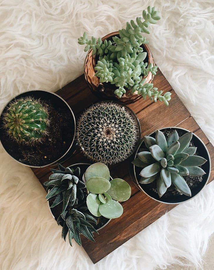 NY Plants List1