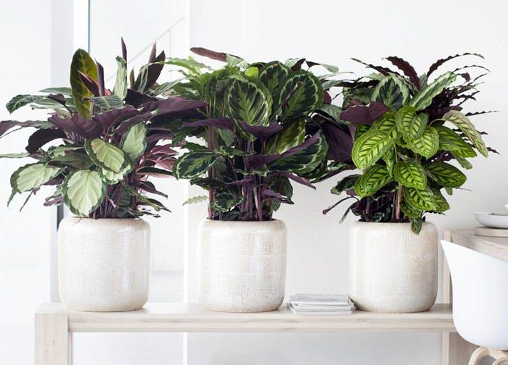 NY Plants List2