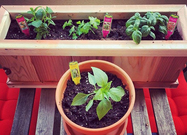 NY Plants List4